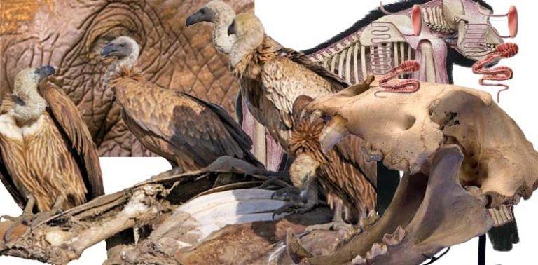 I spent $88,521 on vulture, elephant intestine, lion's skull to make sacrifice for petitioner's success, convict tells Kwara court